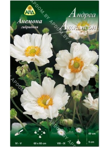 Анемона гибридная Андреа Аткинсон (Anemone x hybrida Andrea Atkinson)