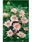Анемона гибридная Королева Шарлотта (Anemone x hybrida Queen Charlotte)