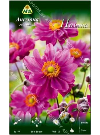 Анемона гибридная Памина (Anemone x hybrida Pamina)