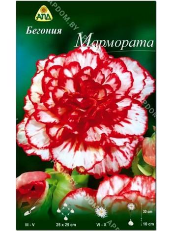 Бегония Мармората (Begonia Marmorata)