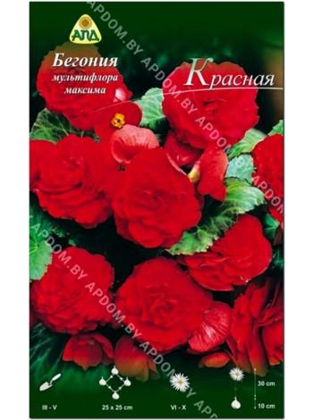 Бегония мультифлора максима Красная (Begonia multiflora maxima)