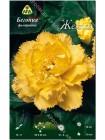 Бегония фимбриата Желтая (Begonia fimbriata)
