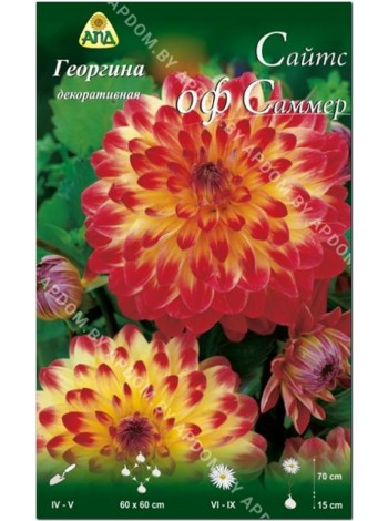 Георгина Сайтс оф Саммер (Dahlia Sights of Summer)