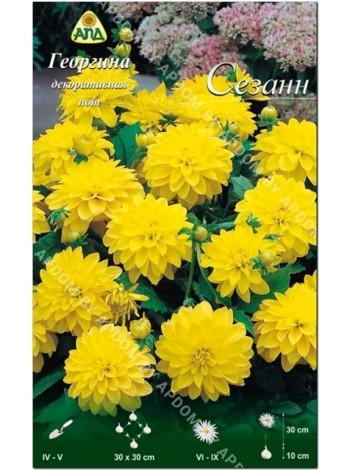 Георгина Сезанн (Dahlia gallery Cezanne)