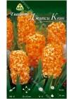 Гиацинт Джипси Квин (Hyacinthus Gipsy Queen)
