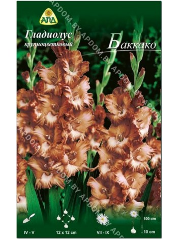 Гладиолус Баккако (Gladiolus Buccaco)