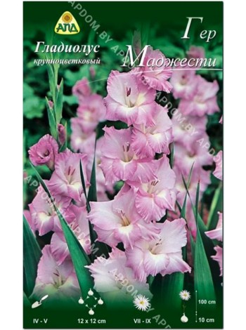 Гладиолус Гер Маджести (Gladiolus Her Majesty)