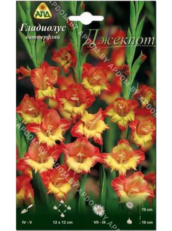Гладиолус Джекпот (Gladiolus Jackpot)
