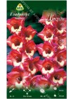 Гладиолус Джуди (Gladiolus Judy)