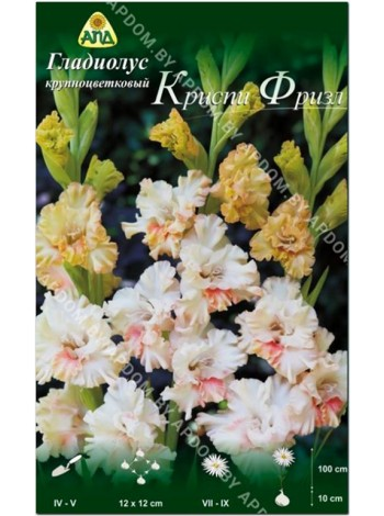 Гладиолус Криспи Фризл (Gladiolus Crispy Frizzles)