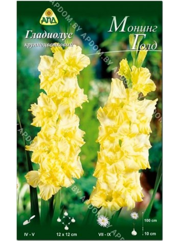 Гладиолус Монинг Голд (Gladiolus Morning Gold)