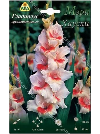 Гладиолус Мэри Хаусли (Gladiolus Mary Housley)