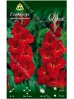 Гладиолус Оскар (Gladiolus Oscar)