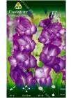 Гладиолус Пепл Флора (Gladiolus Purple Flora)