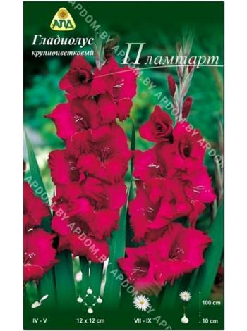 Гладиолус Пламтарт (Gladiolus Plumtart)