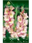 Гладиолус Присцилла (Gladiolus Priscilla)