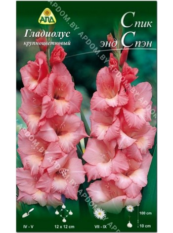 Гладиолус Спик энд Спэн (Gladiolus Spic and Span)