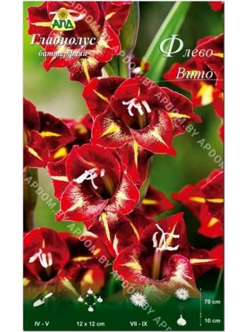 Гладиолус Флево Вито (Gladiolus Flevo Vito)