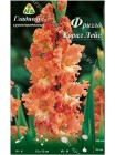 Гладиолус Фризлд Корал Лейс (Gladiolus Frizzled Coral Lace)