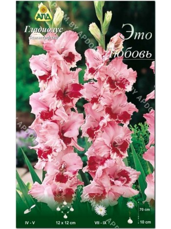 Гладиолус Это Любовь (Gladiolus That's Love)