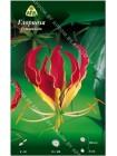 Глориоза Ротшильда (Gloriosa rothschildiana)