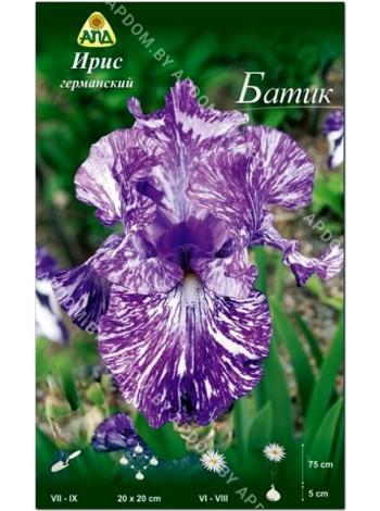 Ирис германский Батик (Iris germanica Batik)