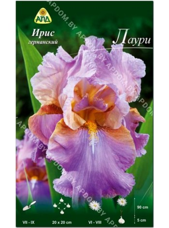 Ирис германский Лаури (Iris germanica Laurie)
