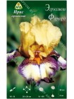 Ирис германский Эгрэссивли Форвард (Iris germanica Aggressively Forward)