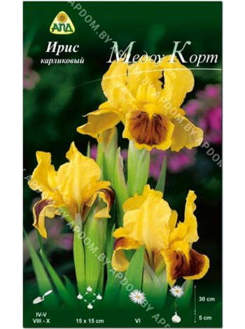 Ирис карликовый Медоу Корт (Iris pumila Meadow Court)
