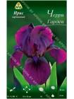 Ирис карликовый Черри Гарден (Iris pumila Cherry Garden)
