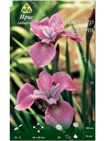 Ирис сибирский Лавендер Баунти (Iris sibirica Lavender Bounty)
