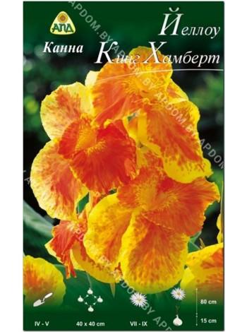 Канна Йеллоу Кинг Хамберт (Canna indica Yellow King Humbert)