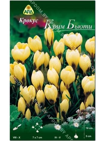 Крокус Крим Бьюти (Crocus chrysanthus Cream Beauty)