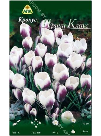 Крокус Принц Клаус (Crocus chrysanthus Prins Claus)