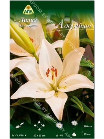 Лилия Адорейшн (Lilium LA Adoration)