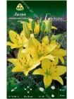 Лилия Голдвинг (Lilium asiatic pot Goldwing)