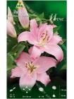 Лилия Исче (Lilium oriental Esscher)