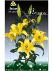 Лилия Йеллоуин (Lilium OT Yelloween)