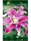 Лилия Лайлак Клоуд (Lilium oriental Lilac Cloud)