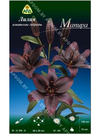Лилия Мапира (Lilium asiatic Mapira)