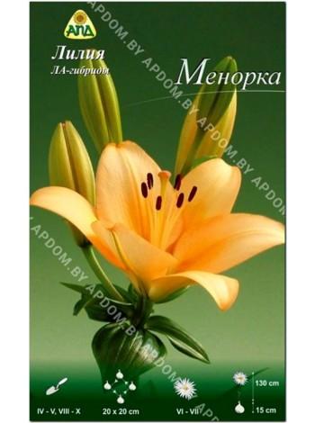 Лилия Менорка (Lilium LA Menorca)