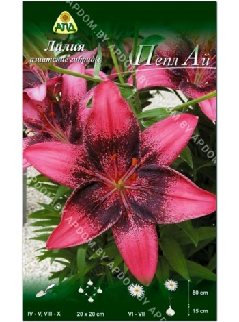 Лилия Пепл Ай (Lilium asiatic Purple Eye)