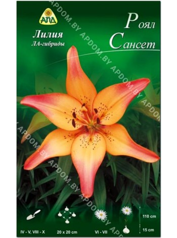 Лилия Роял Сансет (Lilium LA Royal Sunset)
