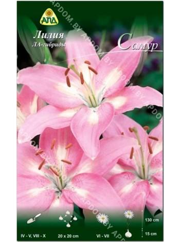 Лилия Самур (Lilium LA Samur)