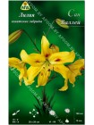 Лилия Сан Валлей (Lilium asiatic Sun Valley)