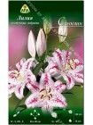 Лилия Солюшн (Lilium oriental Solution)