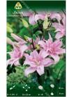 Лилия Спринг Пинк (Lilium asiatic Spring Pink)