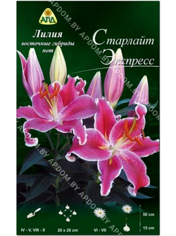 Лилия Старлайт Экспресс (Lilium oriental pot Starlight Express)