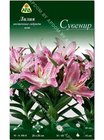 Лилия Сувенир (Lilium oriental pot Souvenir)