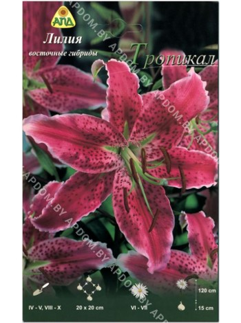 Лилия Тропикал (Lilium oriental Tropical)